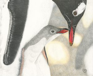 Original Gentoo Kisses by Emma L. Kerridge
