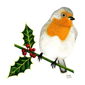 Original Robin Drawing by E. L. Kerridge